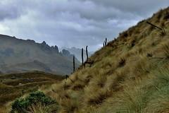 Parque Nacional Cajas, Ecuador (zug55) Tags: landscape ecuador paisaje grassland cuenca páramo cajas parquenacionalcajas cajasnationalpark azuay lascajas grasslandecosystem páramodelcajas