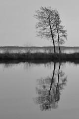Trees reflected in water (Martijn Nijenhuis) Tags: white black reflection tree water bomen nikon zwart wit f28 martijn hoogezand 1755 reflectie spiegelbeeld nijenhuis d90 meerwijck 1755mmf28gedifafsdxnikkor