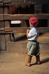fascinação ... (Caio Flavio Jacobus) Tags: brasil rs aceguá cavalocrioulo ascoresdosul abccc vidagaúcha caioflaviojacobus redomãodalagoa estanciadalagoa cabanhascalabassaefirmeza redomãonalagoa2012