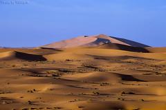 Desert Dunes (TARIQ-M) Tags: texture landscape sand waves desert dunes riyadh saudiarabia بر الصحراء canoneos5d الرياض صحراء رمال رمل canonef70200mmf4lusm طعس كانون المملكةالعربيةالسعودية الرمل خطوط صحاري canoneos5dmarkii نفود الرمال كثبان براري تموجات تموج نفد
