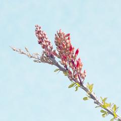 Desert Red (The Shutterbug Eye) Tags: pink blue red arizona green nature nikon desert bloom etsy ocotillo flowerbuds d90