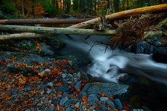 The Tangle (SunnyDazzled) Tags: longexposure autumn trees nature water colors leaves creek forest river landscape evening colorful stream bare logs bent tangle stormdamage tangled