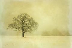 Oak in Winter (Arunas S) Tags: old winter snow tree rural oak retro explore theworldwelivein sailthesevenseas artistictreasurechest bestcapturesaoi imagicland magicunicornverybest magicunicornmasterpiece sailsevenseas elitegalleryaoi
