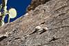 Cactus on the cliff (doveoggi) Tags: arizona aguafrianationalmonument 0276