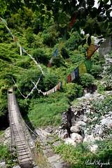One of the numerous suspension bridges in the Annapurna region (Michał Olszewski) Tags: bridge nepal water river asia footbridge land suspensionbridge himalayas acap civilengineering gandaki kaski annapurnaconservationarea annapurnaconservationareaproject kimrongkhola landstructures