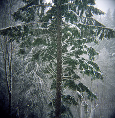From my time in the forest (Zeb Andrews) Tags: winter film weather oregon forest square holga hiking snowing muted larchmountain bluemooncamera thecombinedcostofallourcamerasforthisshowisroughly300forsixcameras youcouldtradeinallthoseholgasandstillnothaveenoughforanewdslrornewfilmslr