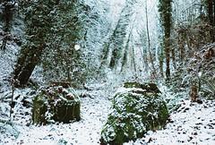 Wilderness. (eakessp) Tags: trees winter wild plants white snow tree green film beautiful 35mm season landscape washington sticks pretty unitedstates disposablecamera tacoma wilderness flakes tranquil winterscape