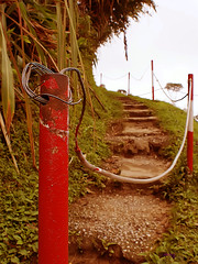Climb Me Up (Vintage Version) (Haryth Hayqal) Tags: old plant tree nature composition vintage landscape climb stair dof bokeh hill pole tone
