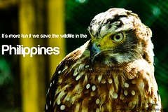 It's more fun if we save the wildlife in the Philippines (Reyne Villena) Tags: birds animals flickr philippines owl cebu cebusugbo teampilipinas wildbirdphotography