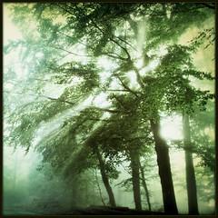 EmeraldWutheringLights (BphotoR) Tags: autumn trees light oktober mist green misty fog forest germany october nebel hessen herbst silhouettes powershot rays wald emerald smaragd farben odenwald wuthering naturesfinest unicolor strahlen bergstrasse einfarbig sdhessen supershot g10 abigfave juhhe smaragdgrn anawesomeshot bphotor emeraldwutheringlights
