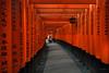 Japan - the red gates of Fushimi-inari (sadaiche (Peter Franc)) Tags: winter red man japan sunrise temple kyoto gate gates path traditional ring tradition 1000 fushimiinari 1000gates