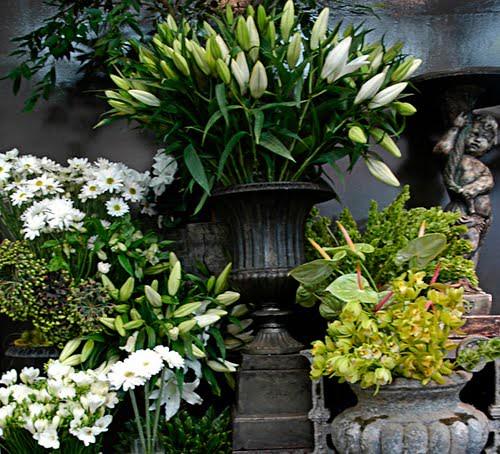 Orchid Florist Dunedin NZ