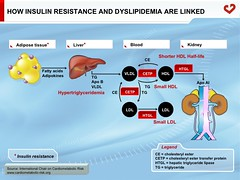 How insulin resistance and dyslipidemia are linked (My Healthy Waist) Tags: insulinresistance adiposetissue lipidslipoproteins