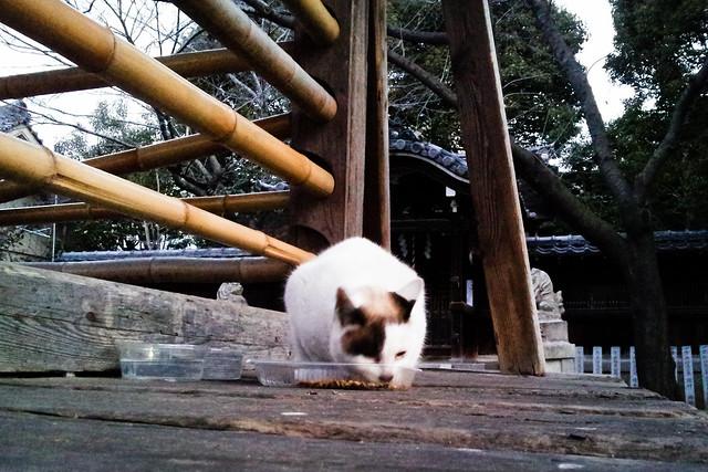 Today's Cat@2012-02-08