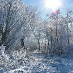 Walking on a fresh patch of snow (Bn) Tags: blue trees winter sky sun snow hot cold tree ice coffee amsterdam forest walking geotagged topf50 frost crystals paradise quiet path air skating freezing 10c sunny fresh clear crisp freeze enjoy layer backlit temperature wintertime wonderland whitesnow topf100 invigorating pleasure colder absorbed sportpark ripe hoar degrees noord exhilarating wintry celcius energizing 100faves 50faves zunderdorp buikslotermeer buikslotermeerdijk zwartegouw weeren geo:lon=4958804 geo:lat=52401902