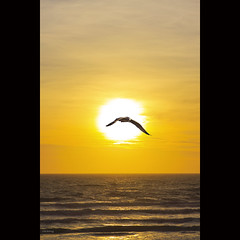 happiness is freedom (-clicking-) Tags: ocean morning sea sky sun sunlight seascape sunshine birds yellow sunrise skyscape landscape dawn freedom golden fly flying waves free happiness vietnam round beautifulday phanthit bnhminh vietnameselandscape