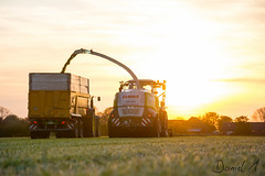 Harvesting grass with Claas and John Deere (Daniel H. M.) Tags: sunset sun tractor grass sonnenuntergang farming landwirtschaft kipper gras jaguar trailer silage sonne johndeere johny niederrhein 6r anhnger claas raubkatze hcksler joskin hckseln agrarfoto