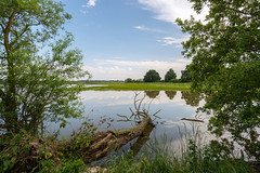 Outlook to the pond (szhorvat) Tags: lake landscape pond outlook fallentree ain dombes