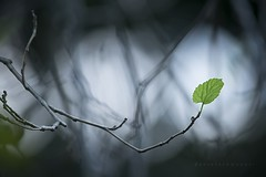 Autumn (Daniela Romanesi) Tags: autumn green leaves backlight leaf profundidadedecampo misteriosa 2658 aoarlivre