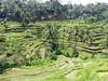 20160321_115847 (kiaksar2004) Tags: trees bali tree green nature indonesia landscape island village rice terrace ubud tegalang