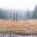 Misty Meadow [128366]