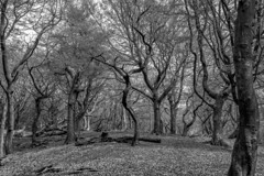 Tandle Hills B&W (petebrierley) Tags: trees sky blackandwhite nature beautiful beauty composition forest landscape manchester woods decay fantasy oldham beaut