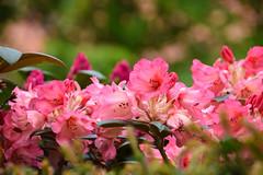 Flower (Maria Eklind) Tags: park city flowers summer flower green colors leaves se spring europe sweden outdoor sverige malm pildammsparken skneln