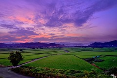 Sunrise at paddy field (Clonedbird  & Iris ) Tags:     sunrise rice farm d810 nikon countryside ricefield paddy taiwan