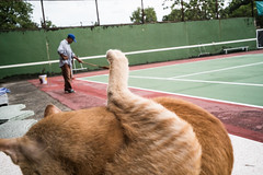 * (Sakulchai Sikitikul) Tags: street leica cat work 35mm thailand sony streetphotography snap summicron tennis songkhla tenniscourt hatyai a7s