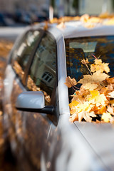 IMGP3047 (daitoZen) Tags: november autumn fall leaves car lensbaby munich leaf walk sunday foliage composer gettygermanyq4 giap12111