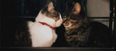 Paloma&Morena - (Roooo.) Tags: cats paloma gata morena gatas