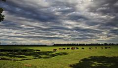 2011-11-20 60D Huinca Renanco 186 (James Scott S) Tags: usa argentina weather animals clouds canon scott landscape eos james cow cattle ar florida farm united el bull ii di cordoba campo fl states af dslr tamron vc toro huinca f3563 60d renanco 18270mm