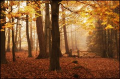 Autumn (Ben Locke (Ben909)) Tags: autumn nature forest forestofdean