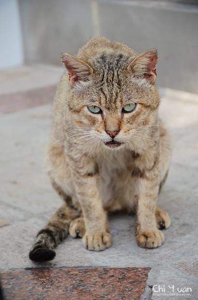[Cat]台北士林夜市。一種頹廢