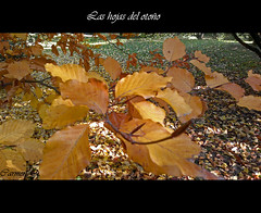 LAS HOJAS  DEL OTOO (Carmen Q.1) Tags: hojas niceshot nieve otoo invierno frio oltusfotos panoramafotogrfico mygearandme rememberthatmomentlevel1