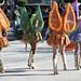 Ragazze in sfilata per la festa del 8 dicembre
