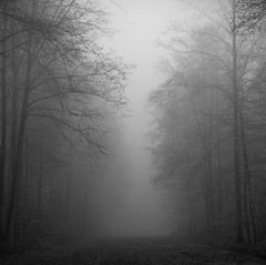 Gloires dchues (The smiling monkey) Tags: morning autumn bw white mist black fall misty fog mystery forest automne de landscape bomen noir nebel belgique belgie herbst herfst nb bosque nebbia bos et wald bume foret blanc niebla baum brouillard brume foresta mattina caduta woud soignes brumes