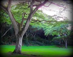 ~~WaimeaBotanicalGarden#13~~ (TravelsThruTheUniverse) Tags: niceshot tropicalplants exoticgardens oahuhawaii tropicalgardens tropicalfoliage subtropicalgardens waimeavalleybotanicalgarden tropicallandscapes subtropicallandscapes bbng waimeavalleyoahu waimeaparkhaleiwaoahu