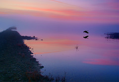 Abandonado. / Leaving Song. (Oscar Martn Antn) Tags: espaa fog fairytale sunrise geese spain amanecer niebla palencia ganso cuentodehadas boadadecampos