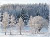 White winter . (Bessula) Tags: winter white snow tree nature forest frame texure abigfave bessula saariysqualitypictures bestcapturesaoi magicunicornmasterpiece