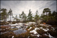 (Jonas Thomn) Tags: trees sea sky cliff mountain tree berg grass rock clouds puddle moss cloudy himmel sten hdr trd havet mossa moln kippa grs molnigt 9ex1ev vattenpott
