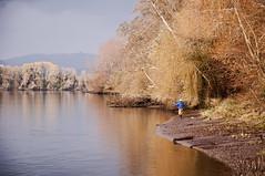 Maestro (Rossana Ferreira) Tags: autumn tree portugal rio river nikon fishermen nikkor rossana 18105 minho valena ferreira d90 rossanaf