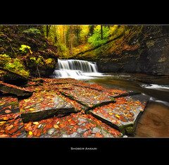 Fillmore Glen Gorge, Finger Lakes. (Shobeir) Tags: longexposure autumn panorama newyork leaves america creek season landscape waterfall october stream hiking wideangle fallfoliage trail changing covered fallen fingerlakes northeast goldenleaves autumninnewyork fillmoreglen autumnlandscape shobeiransari fingerlakesfall newyorkscenic