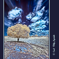 Tree on a Hill - IR Photography (Filip Nystedt) Tags: irinfrared canoneos400d magicunicornverybest canonefs1022mm35usm