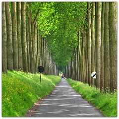 Damme / Belgien (Habub3) Tags: park street wood travel holiday tree green nature leaves car forest truck vanishingpoint weed reisen flora nikon europa europe belgium urlaub natur meadow wiese vehi