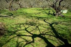 2012 Jan  X100 48 (Austin's Footprints) Tags: taiwan fujifilm digitalcamera plumblossoms nantou  taiwanimage beautifultaiwan finepixx100