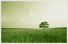 Kites (Rhivu_Ray) Tags: world new wallpaper india green art nature beauty field canon landscape photography eos asia paddy earth dream young kites 7d bengal bangla vast westbengal naturescape 2011 bestofnature sigma1020mmf456exdc naturewallpaper hijli bestofindia canoneos7d canon7d  bestofcanon landscapesofindia paschimbanga hirati ringexcellence dblringexcellence hijliforest rhivuray landscapeofwestbengal landscapeofindia banpatna rhitamvarray paschimmedinipore rhivuphotography rhitamvar