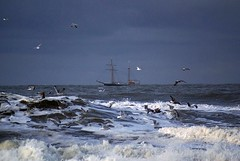 A stormy day at The North Sea (Jaedde & Sis) Tags: sea seagulls storm look ship north wrestler twothumbsup pog bigmomma oceam challengeyouwinner 3waywinner thorsminde flickrchallengegroup flickrchallengewinner 15challengeswinner favescontestwinner a3b friendlychallengewinner achallengeforyou acfy challengefactorywinner thechallengefactory acgwinner fotocompetition fotocompetitionbronze thumbwrestlingchamp herowinner ultraherowinner storybookwinner pregamesweepwinner gamesweepwinner ispysweepwinner ispyhattrickchallengewinner shchofhonorable bestof15 transcendingphotoofthemonth 3waybest2012