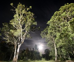Framed (pominoz) Tags: trees moon night valentine nsw lakemacquarie
