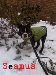 "seamus • <a style=""font-size:0.8em;"" href=""http://www.flickr.com/photos/73968363@N02/6677098299/"" target=""_blank"">View on Flickr</a>"